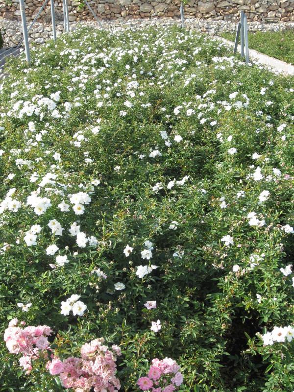Producci n propia viveros pe a centro jardiner a - Centros de jardineria madrid ...