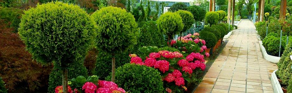 Home viveros pe a centro jardiner a plantas y rboles - Centros de jardineria madrid ...